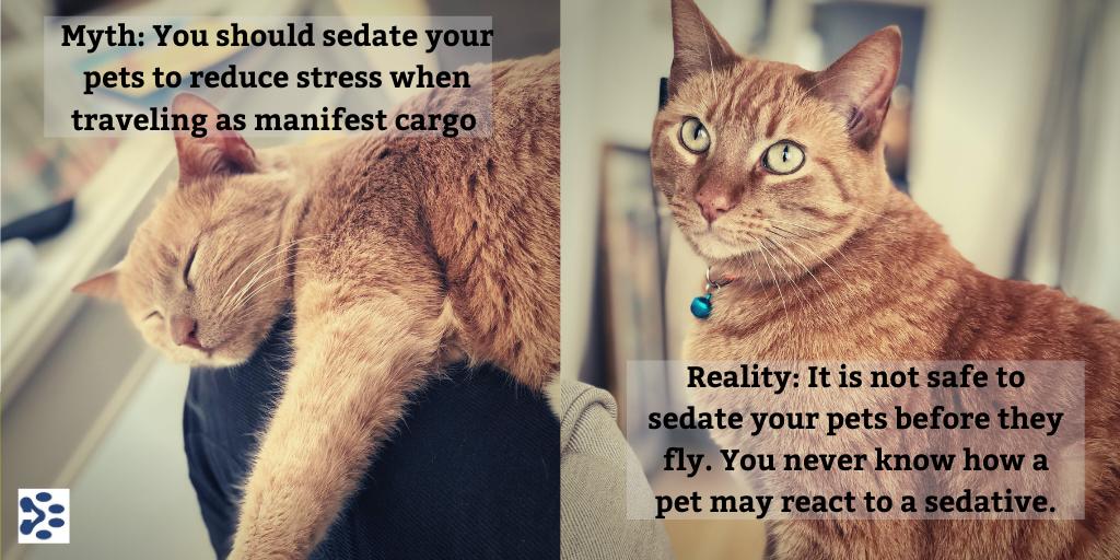 Should I Sedate My Pet Before Travel? NO! in 2020 Pet