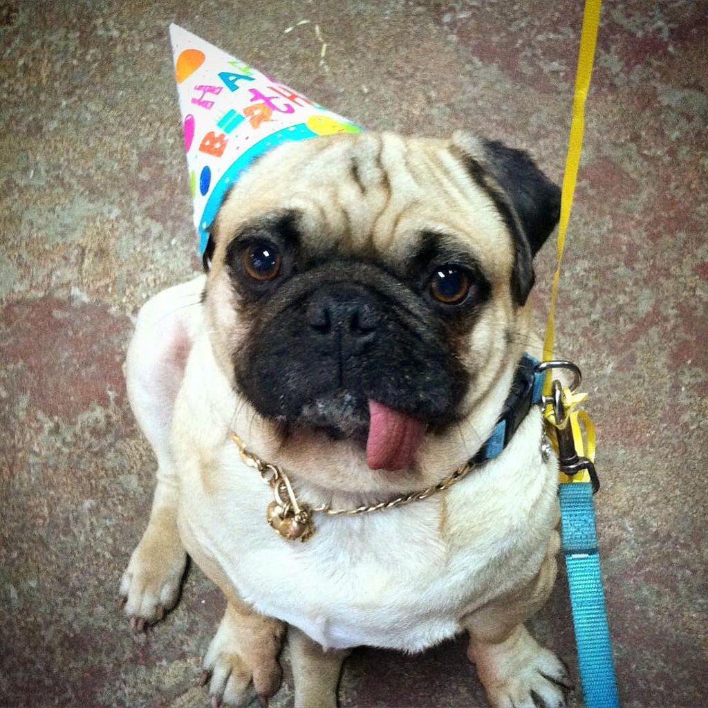 Mama Threw Me Backs To My Numbers Three Birthday I Looks Happier