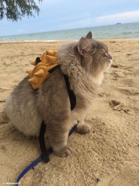 15 Adorable Animals Wearing Their Mini Backpacks Tiere