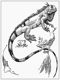 Printable Iguana Adult Coloring Pages Adult Coloring Pages