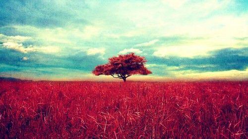 Cute Nature Backgrounds Tumblr Kepek Termeszet Poszter