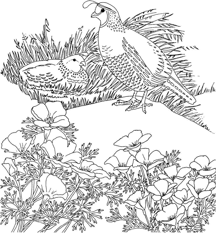 2927 Gif 1027×1112 Cactus Pinterest Pyrography Patterns