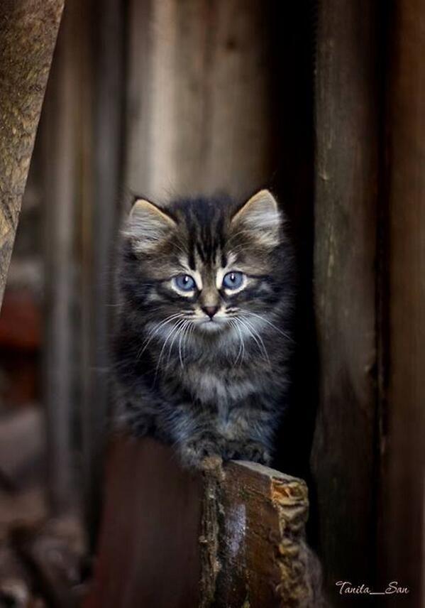 Emergency Kittens On Kittens Cutest Cats Pretty Cats