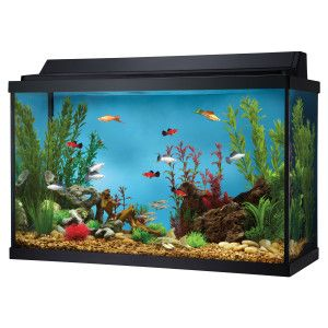 Null 30 gallon fish tank, Aquarium, Fish tank