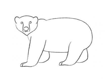 181952 425x329 how to draw polar bear 4