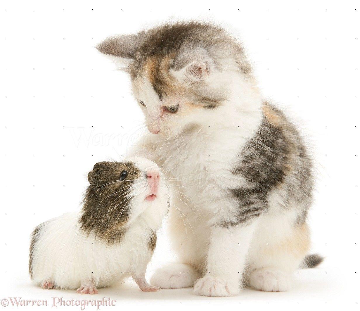 Pin on Animals [Odd Couples]