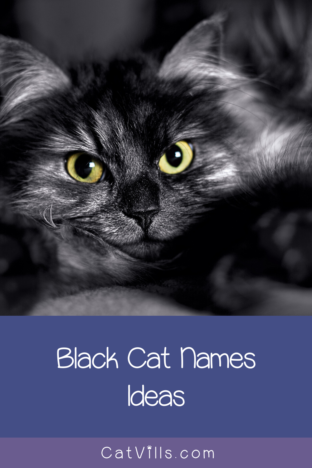 40 Memorable Black Cat Names From Movies in 2020 Cat