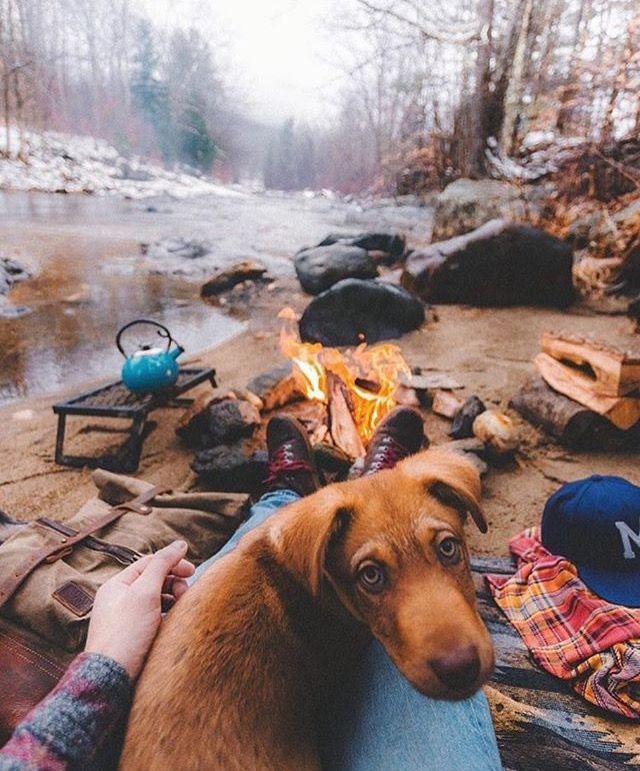 KONI #KONIImproved #KONIExperience | Van Life in 2019 | Hiking dogs