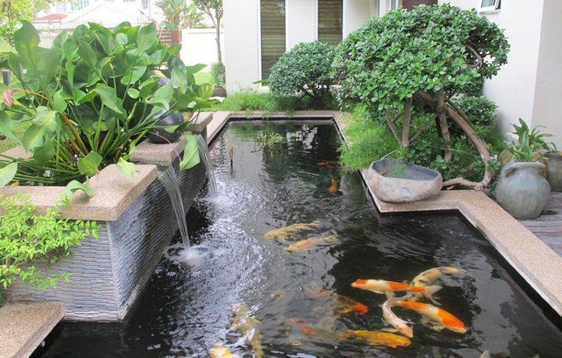 Carpes Koi Dans Le Bassin A Poisson Moderne En 40 Exemples