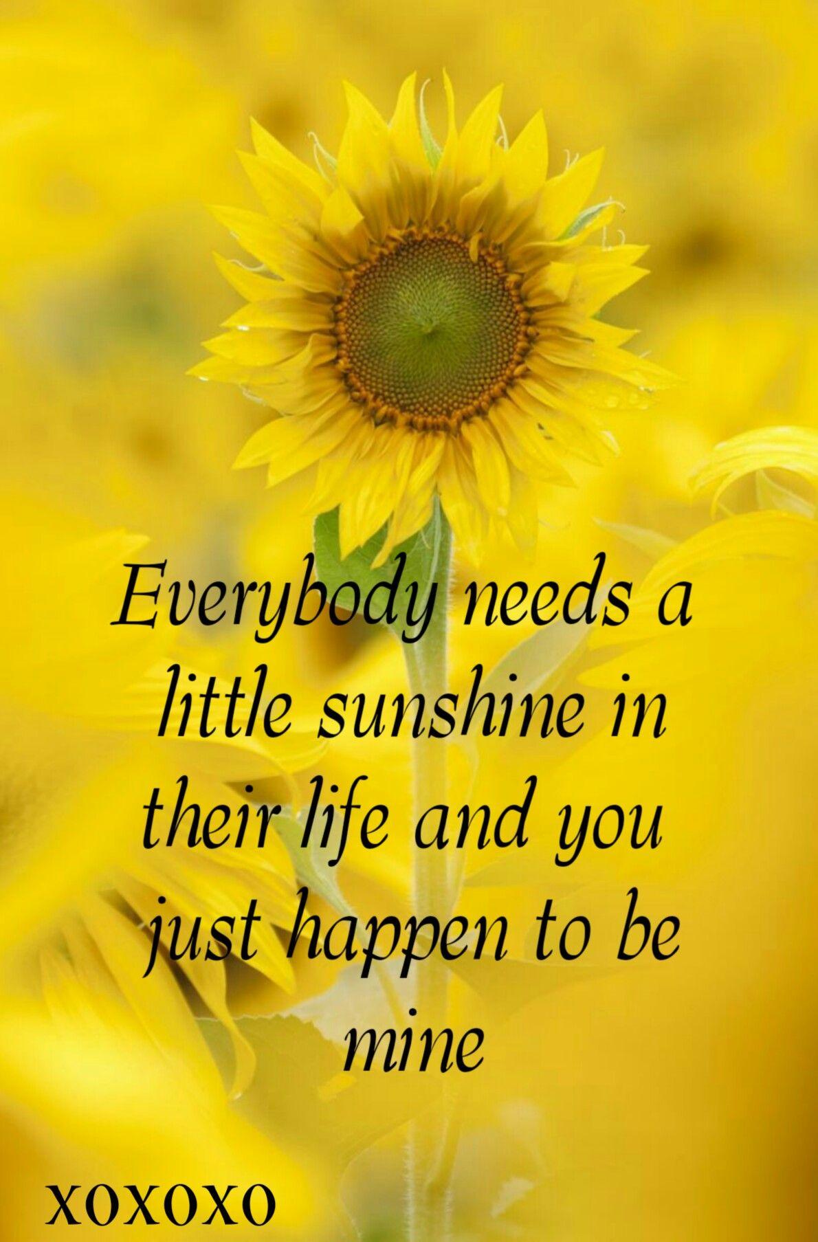 Chalkboard style greeting card Inspirational Card My Sunshine! Sunflower