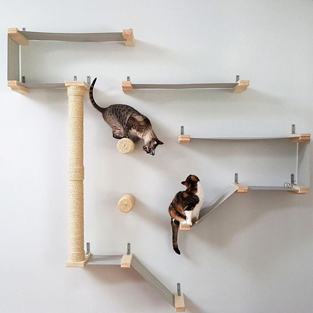 transform your plain walls into a fun playground for your feline friends using this cat hammock activity center  it features a series of canvas hammocks   some of us are cat people and some of us are  really  cat people      rh   pinterest