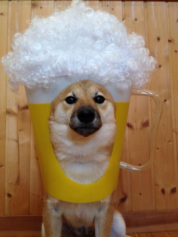 Refreshing Mug Of Puppy Beer Image 2072978 By Marky On
