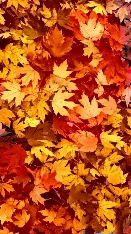 Autumn Leaves  Wallpaper Credits: wallpaper4iphone.tumblr.com  Wallpapers  Fondos otoño