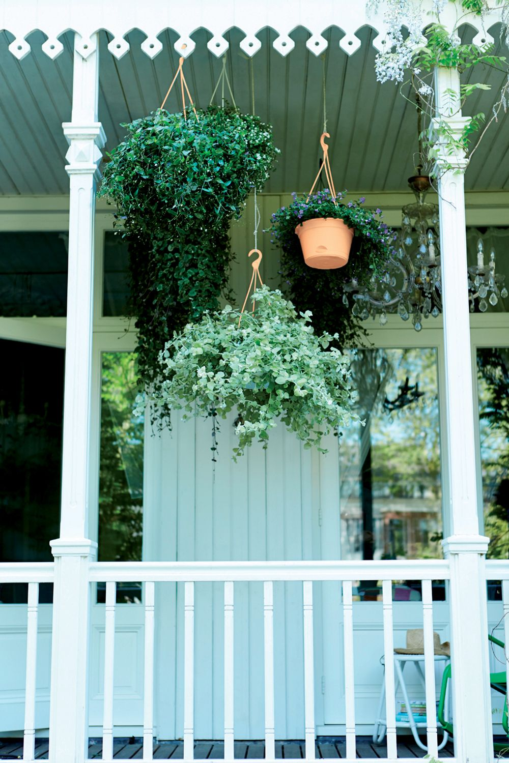 hanging plants and planters