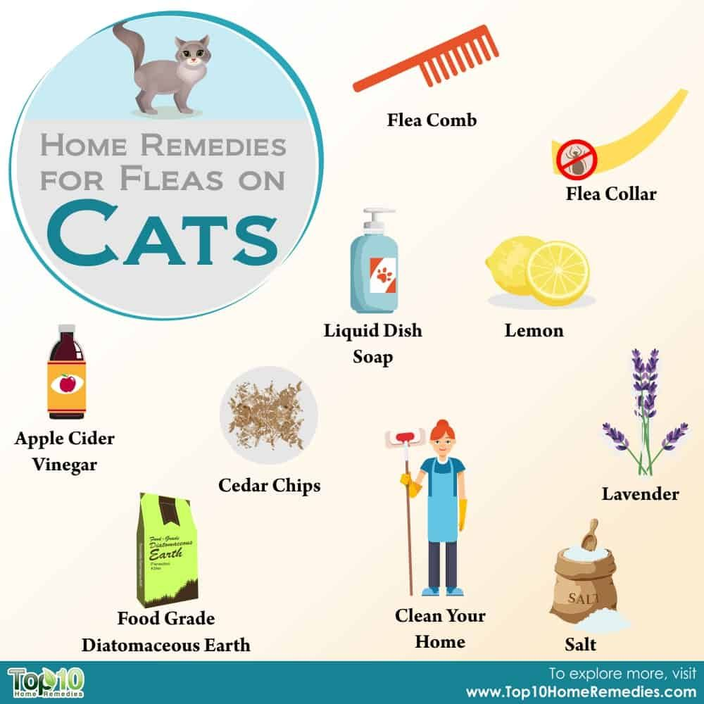Home remedies for fleas on cats home remedies for fleas