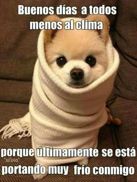 Pin De Maria Eugenia En Buenos Dias Animales Bonitos Animales Bebes Buenos Dias Perros