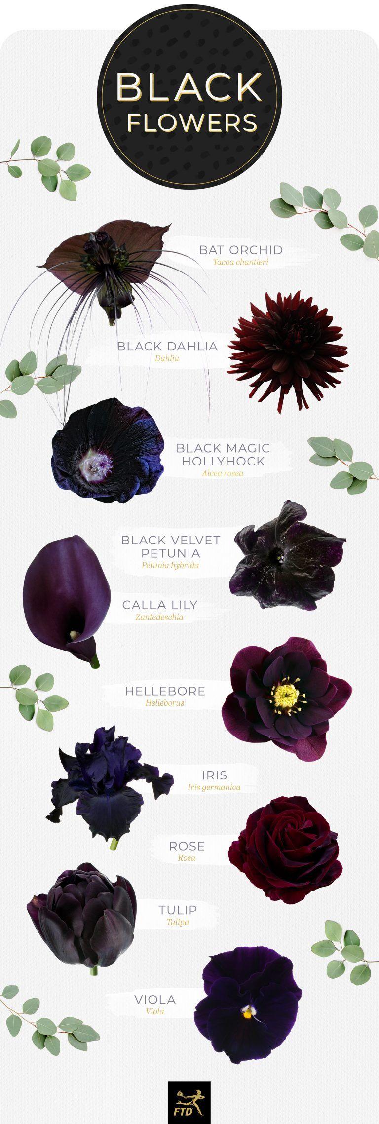 10 Types of Black Flowers Black flowers, Gothic flowers