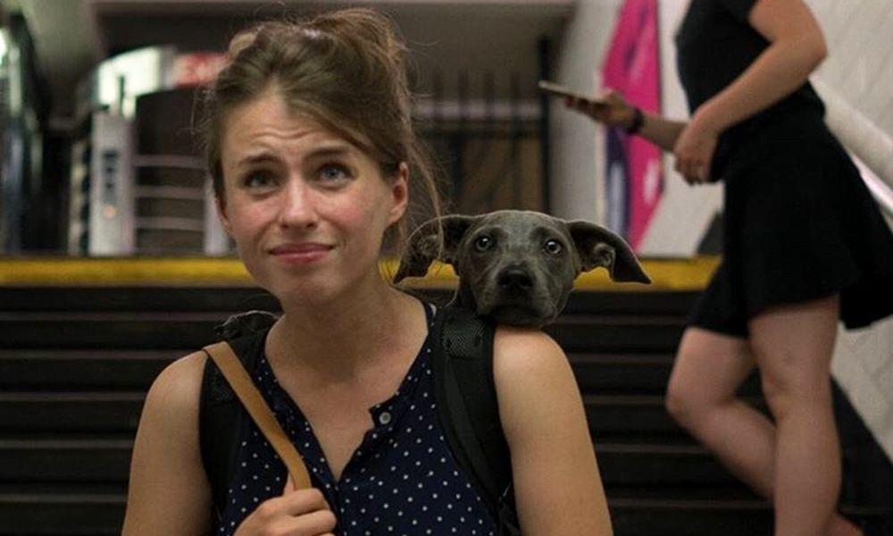 A solução que as pessoas acharam pra proibição de cachorros em metrô de NY é pura fofura
