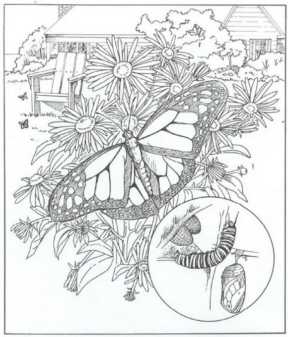 40 coloring pages of nature around the house butterfly