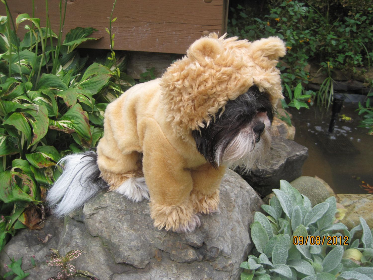 Wizard of Oz Lion Dog Costume size Small | Dog halloween, Lions ...