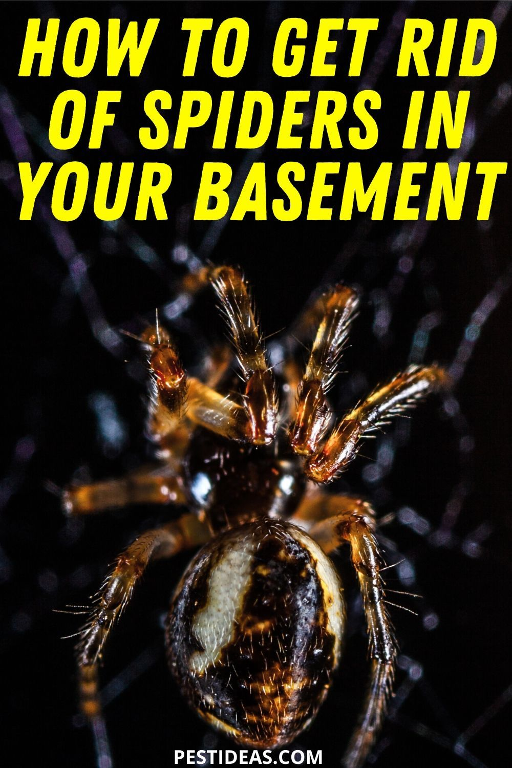 How To Get Rid Of Spiders In Your Basement Get Rid Of Spiders Spider How To Get Rid