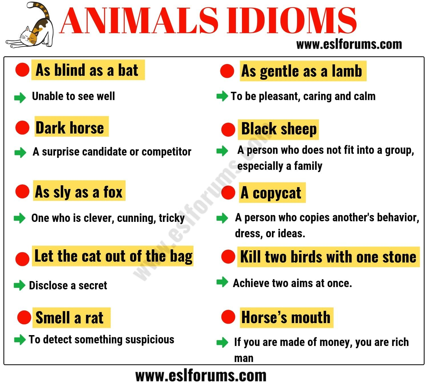 10 Animal Idioms Amp Phrases You Should Learn