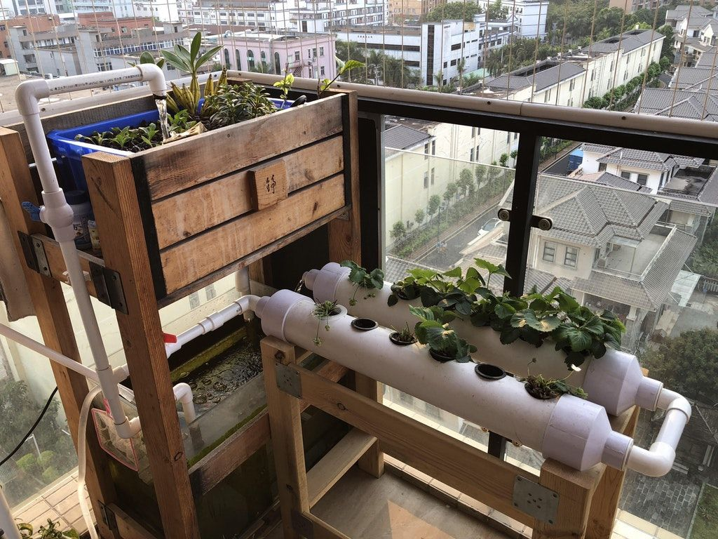 Aquaponics aquaponics aquaponics system build your own