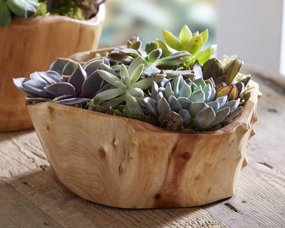 Succulent Garden in Root Bowl - VivaTerra | The Great Indoors ...