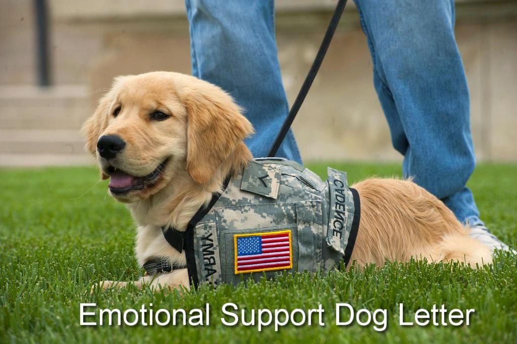 Should veterans be able to train and adopt service dogs at