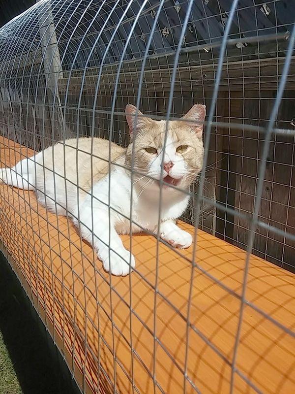 Outdoor Cat Jungle Gym Diy Cat Enclosure Cat Enclosure