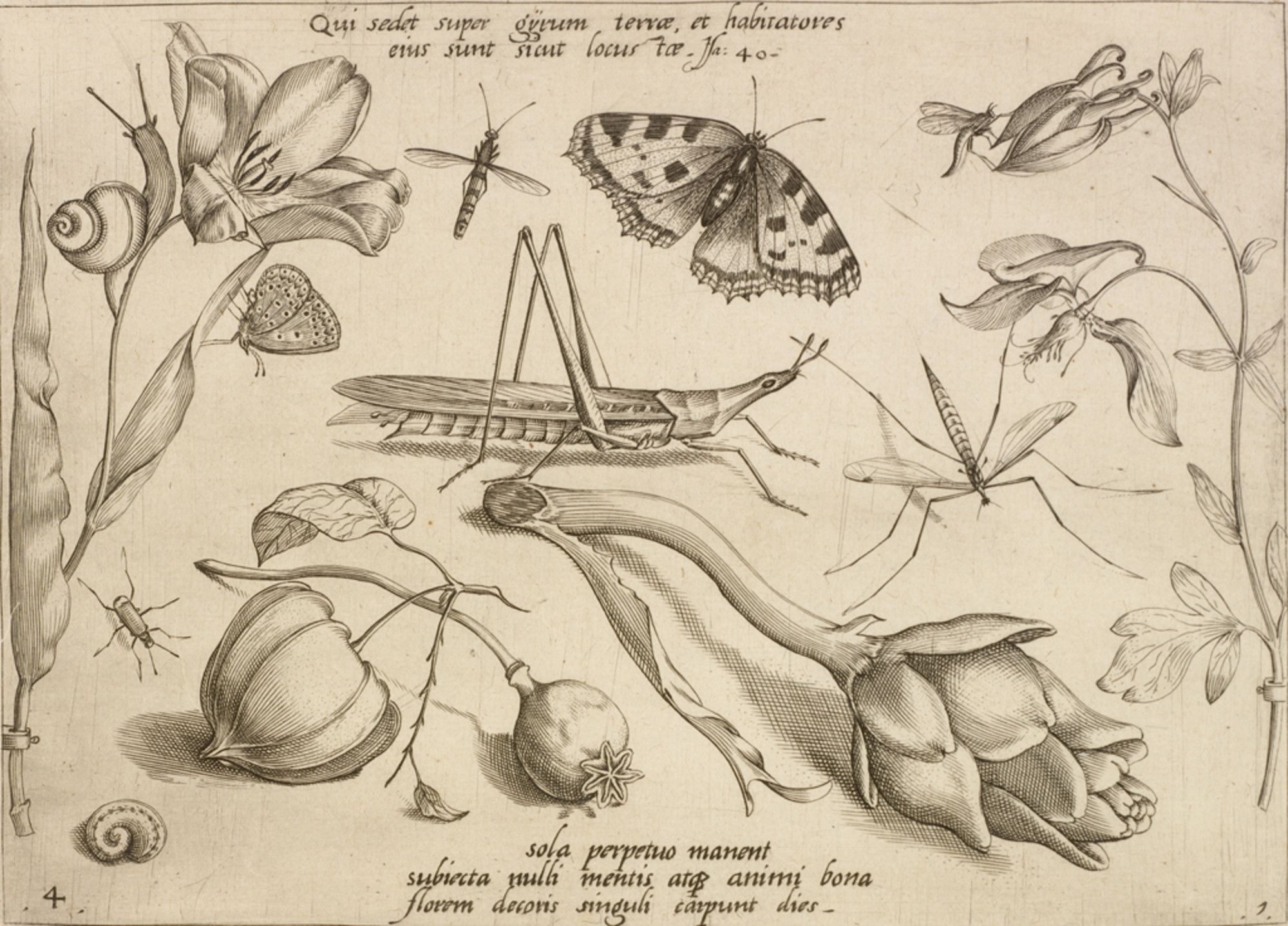 """Jacob Hoefnagel, Flemish, 1575 - c.a. 1630   """"It is he who sits above the circle of the earth, and its inhabitants are like grasshoppers. Isaiah 40 (Qui sedet super gyrum terrae et habitatores eius sunt sicut locustae Isa[ias] 40), from """"Archetypa studiaque patris Georgii Hoefnagelii"""", 1592"""