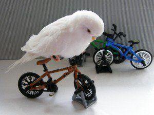 Parakeet On Bicycle Look Hena This Is So Cute