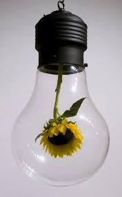 Sunflower Bulb