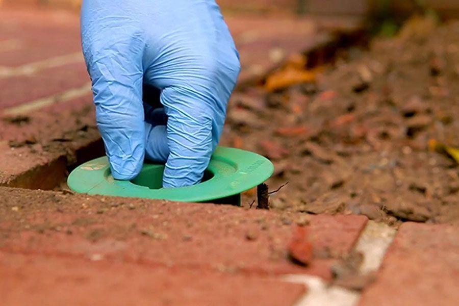 The Basics of Pest Control Termite treatment, Termite