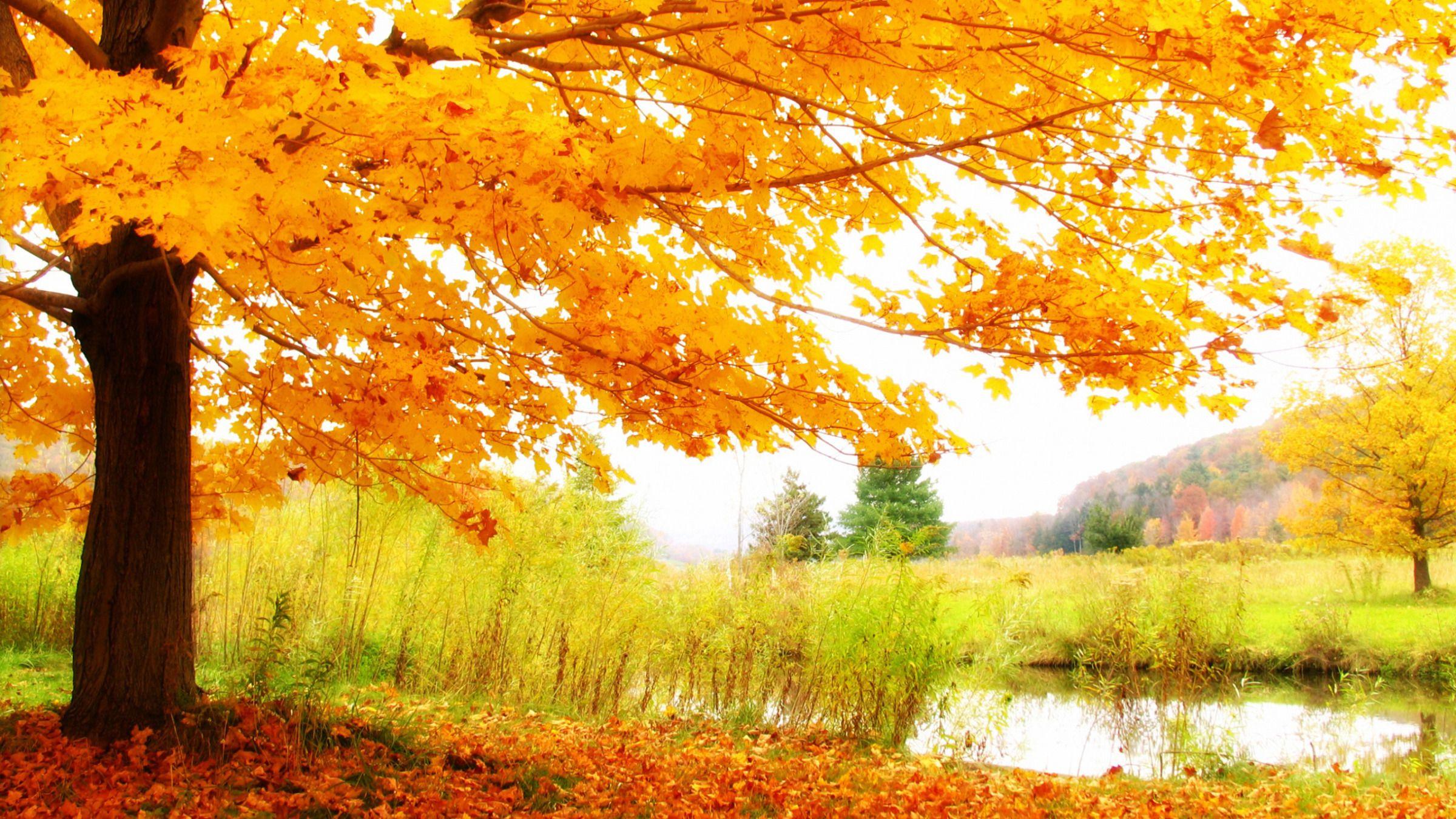 Garden Design Garden Design With Landscape Fall Hd Wallpapera Scenery Wallpaper Autumn Scenery Scenery Pictures