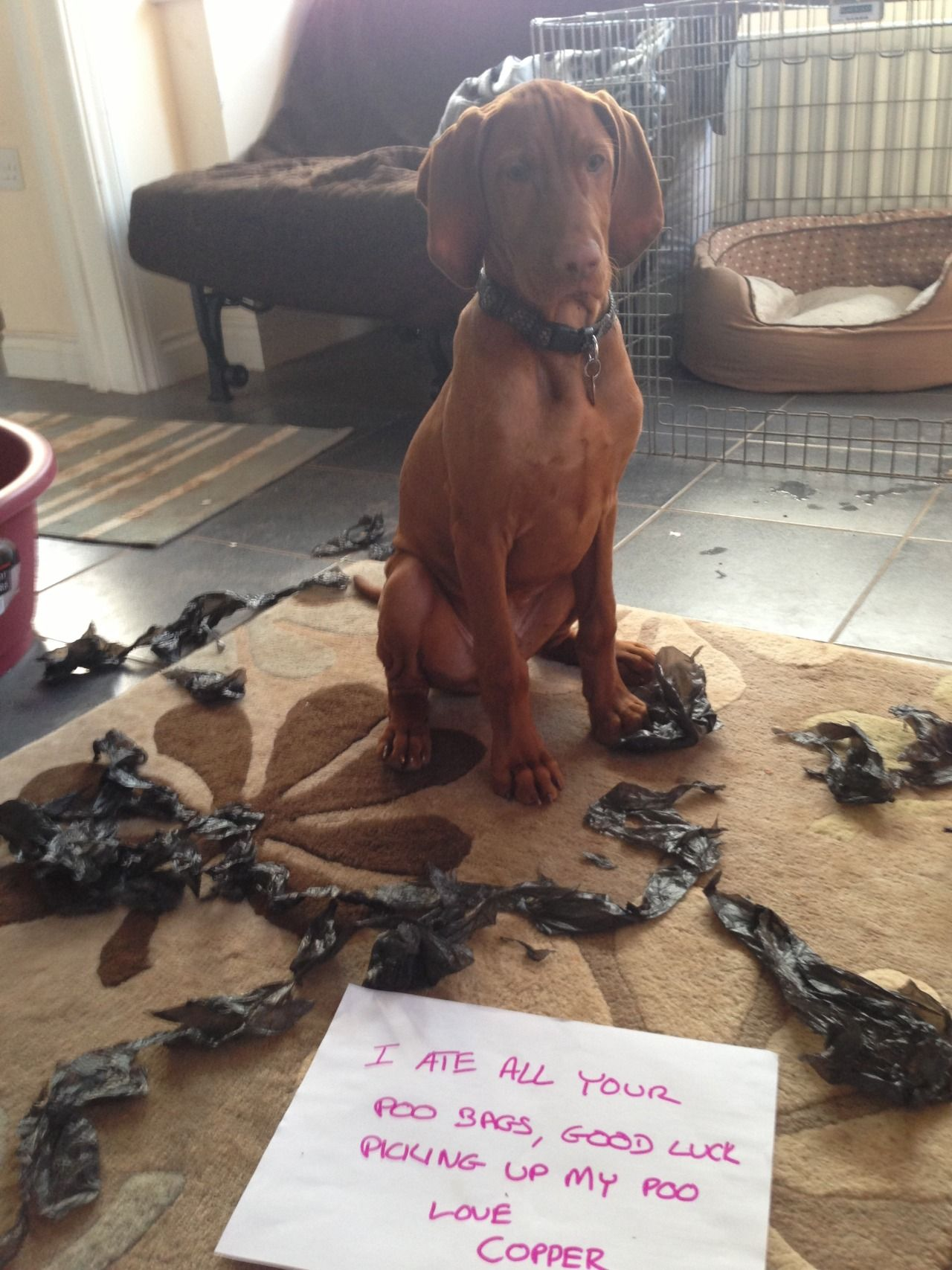 Dog Shame — I ate all your poo bags, good luck picking up