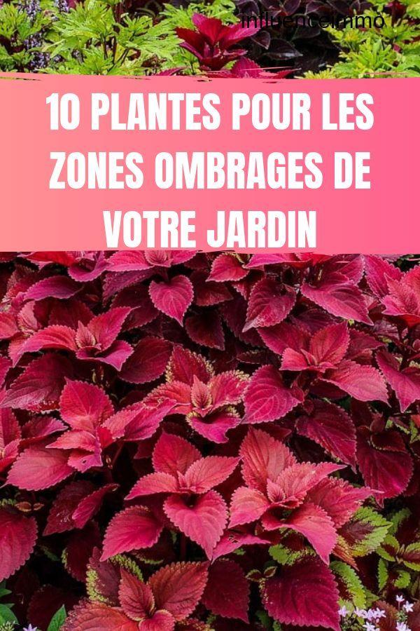HABILLEZ LES ZONES OMBRAGÉES DE VOTRE JARDIN   Plantes d ...