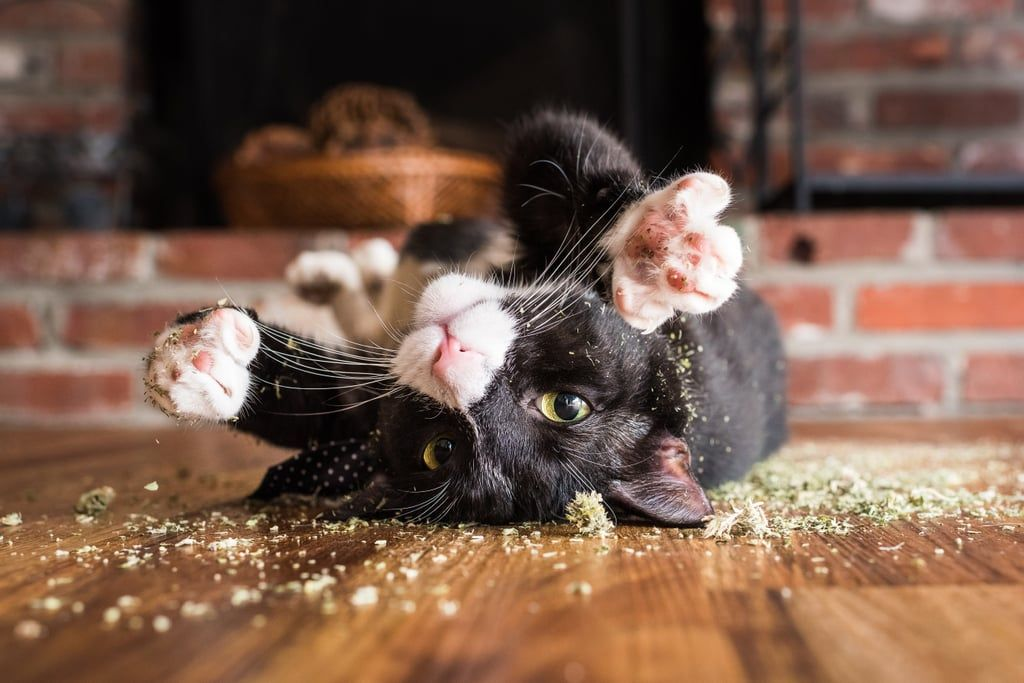 A Photographer Takes Pictures Of Cats High On Catnip And It Ll