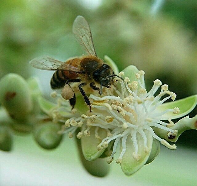 Pin Van Laure Peeters Op Over Bloemetjes Bijtjes En Honing Hommels Bijen Houden