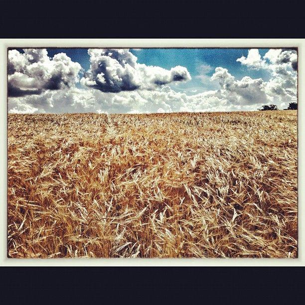 Fields near Luncarty