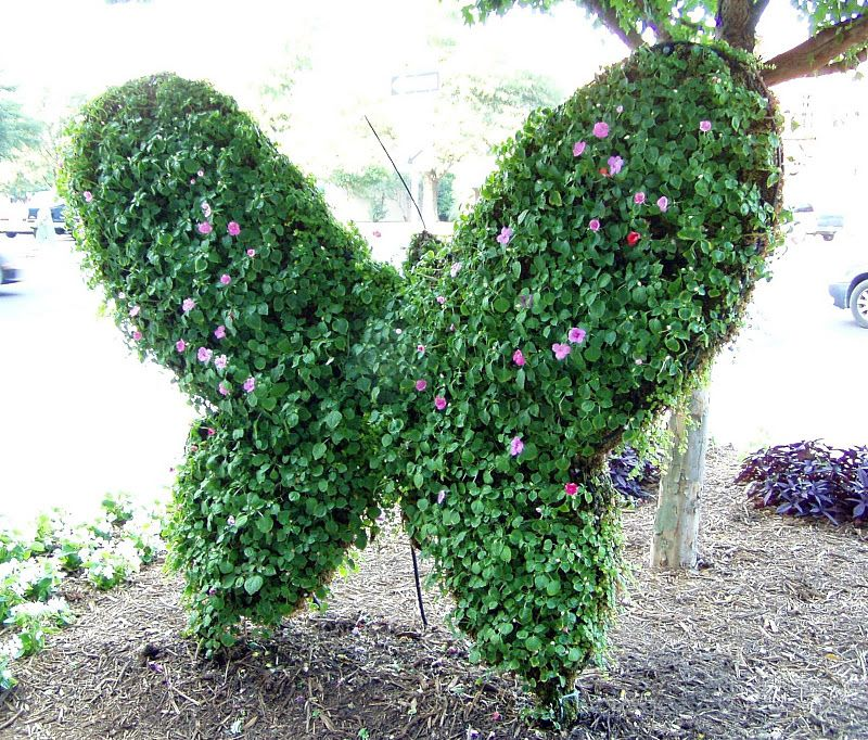 Amazing Topiary: Amazing Topiary's Butterfly
