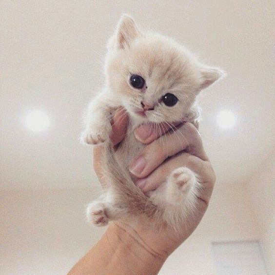 Cute Baby Kitten #adorablekittens