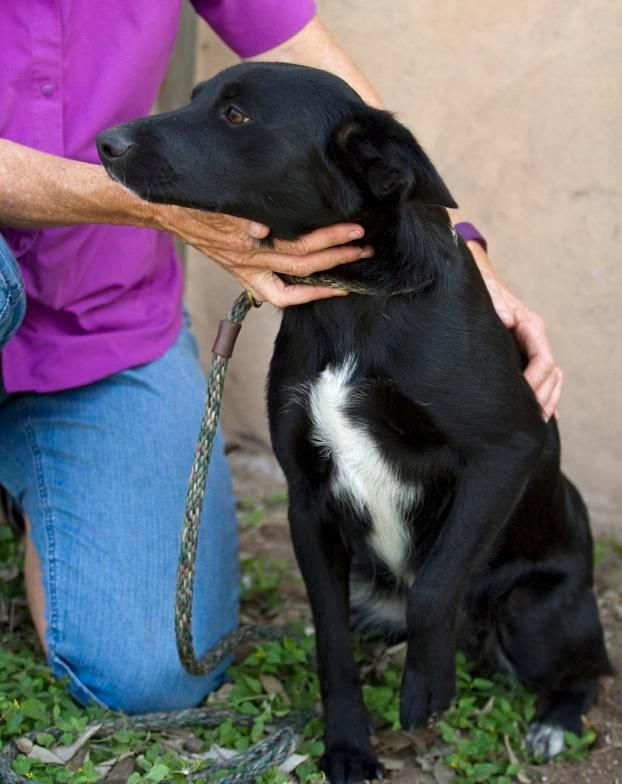 Adopt Florida On Border Collie Puppies And Dogs For Adoption