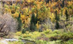 The fall colors are at their peak time of the year, so take this road trip through the most beautiful fall spots in South Dakota! #southdakota #sd #south #dakota #fall #autumn #roadtrip #drive