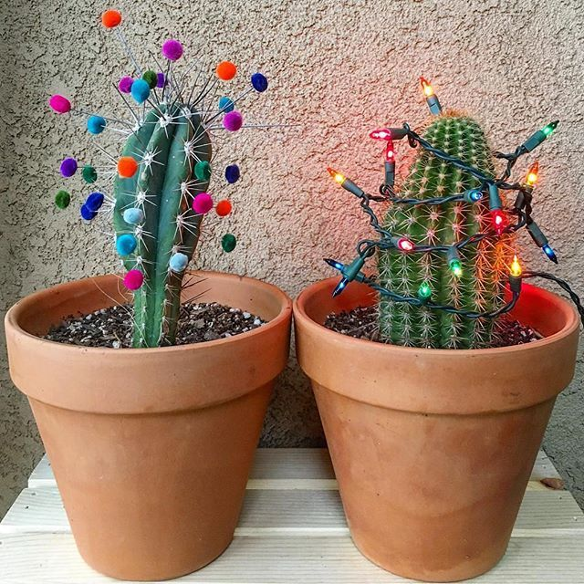 A New Spin On Christmas Cactus Lola Tiliches Thanks For