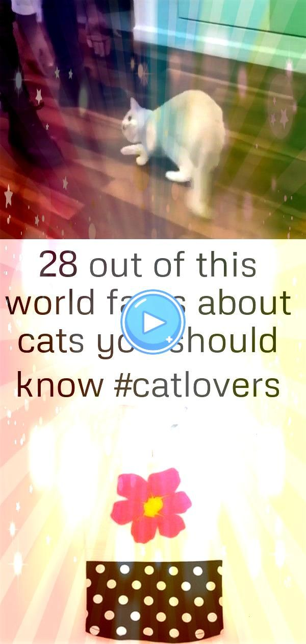 out of this world facts about cats you should know 5 Facts About Cats That will Blow your Mind  PP Flower N Dot Tank pet dog dress small dog clother spring and autumn jea...