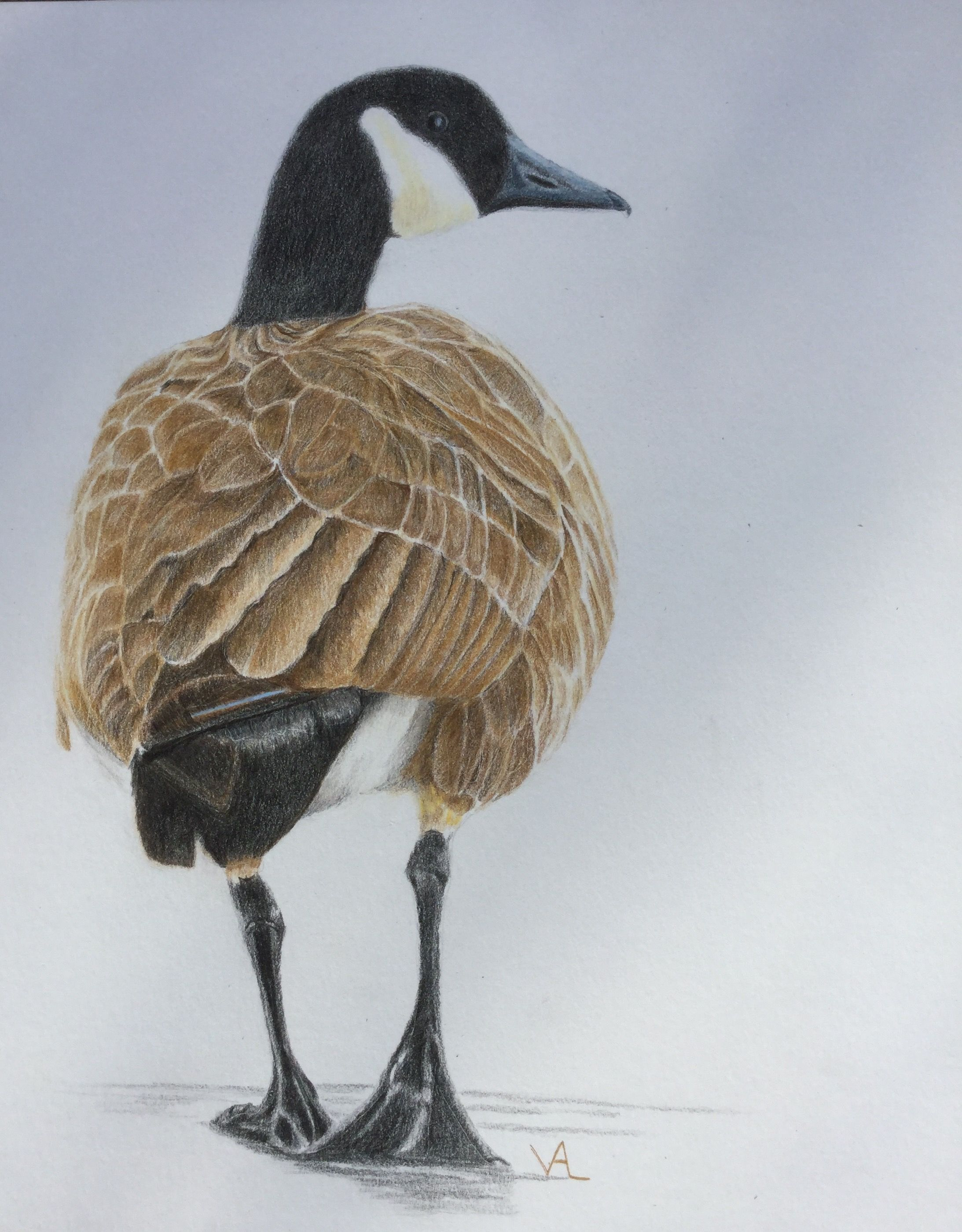 8x10 canada goose colored pencil birds painting art