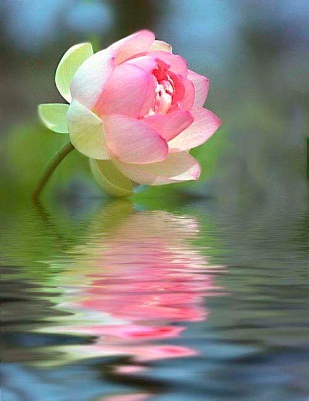 Открытки цветы на воде, днем рождения морем