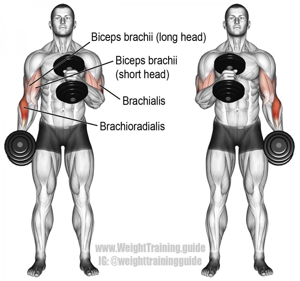 Dumbbell cross-body hammer curl exercise | 01-ESPALDA | Pinterest ...