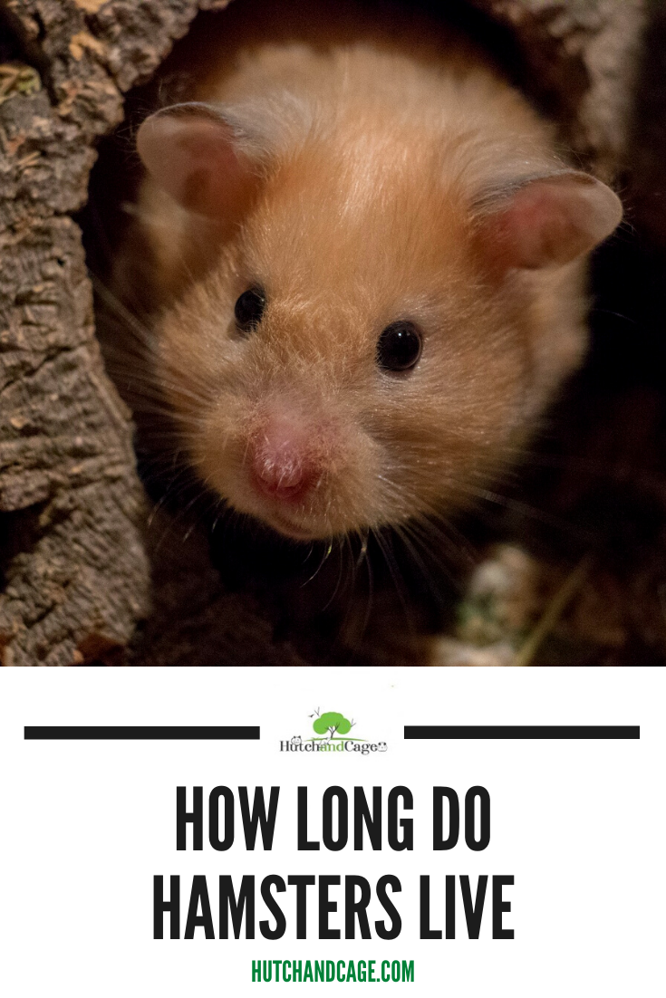 Pin On Hamster Care Guides